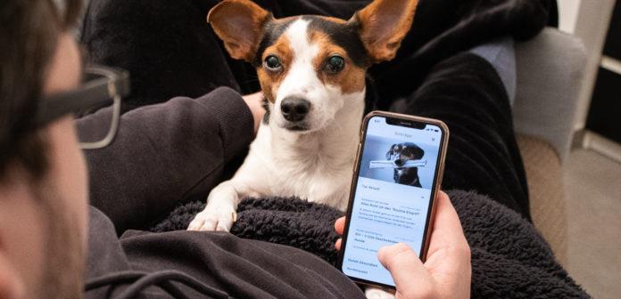 SmartDog Online-Hundeschule App